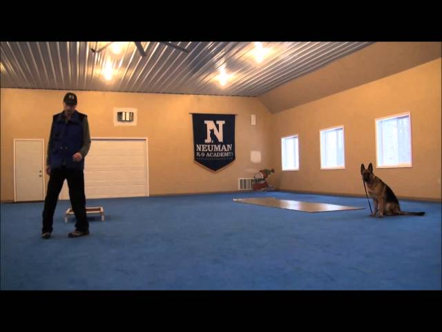 Stella (German Shepherd) Dog Training Video