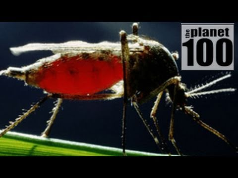 Planet 100: Super Mosquitoes Fight Dengue