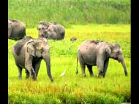 preservation of wildlife in india essay Browse wildlife conservation news, research and analysis from the conversation.