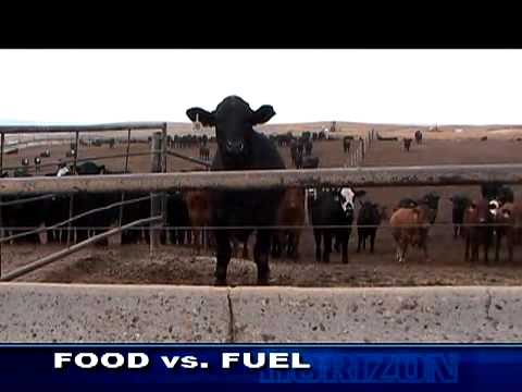 Are biofuels to blame for high cost of food?