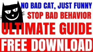 Super Funny Cats Videos Compilation 846   Cute Kittens from Chorus Line   Funny Cats  video