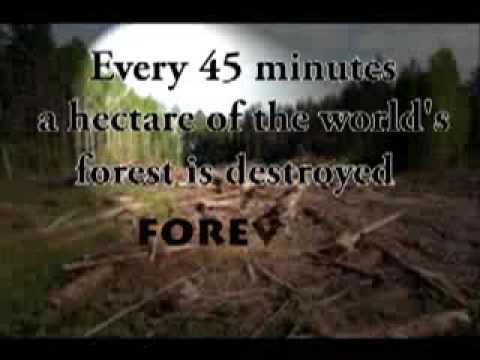essay on deforestation and afforestation