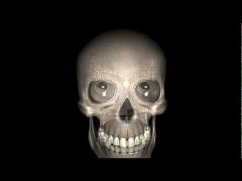eyes skull ghostly moves 3d model    animation  s01r01 scooby doo thumbnail