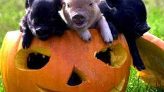 Moondog - Pigmy Pig