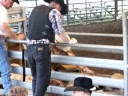 bull ridding