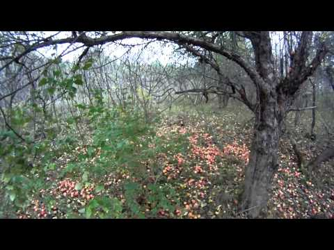 Upland Bird Hunting Of Woodcock & Grouse In Maine 2011