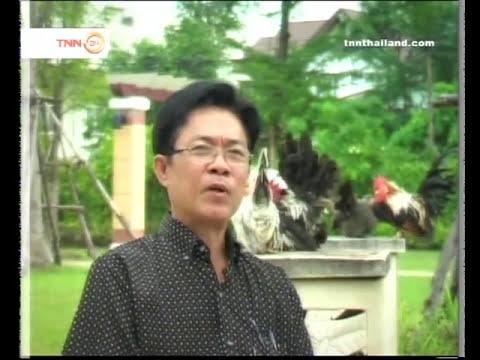 Thai Bantam 2_4.mp4