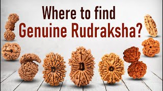 Everything About Rudraksha Beads In A Nutshell