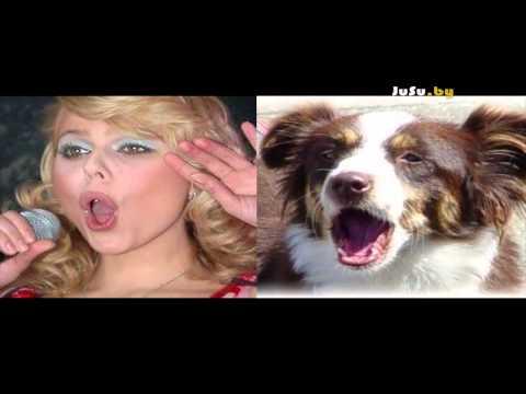 Прикольные сравнения знаменитостей и собак :)