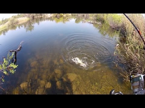 Bass and bluegill fishing nonstop socal best fishing for Lake mathews fishing