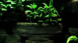 do-it-yourself compact fluorescent pendant aquarium lights