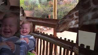 Very funny videos Animals Trolling Babies in the zoo