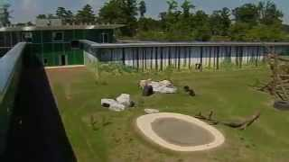 Chimps Held in Captivity for 30 Years Play in the Sun for the First Time