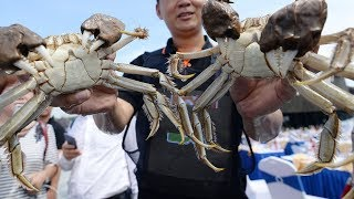 Crab farmers at Yangcheng Lake ready for