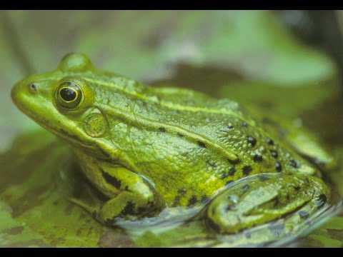Die Schrders - Frosche Weinen Nie