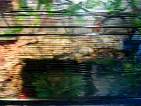 Mississippi Map Turtle Tank Set-up (Tank #2) UPGRADE