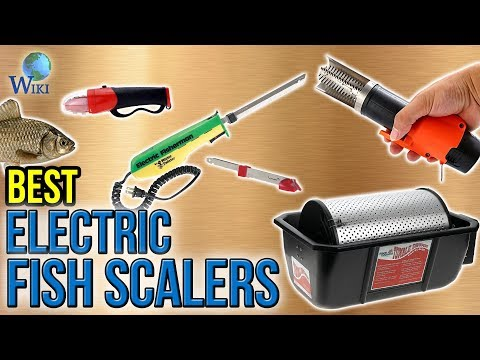 6 Best Electric Fish Scalers 2017