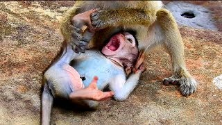 Cruel monkey maltreat baby so much, Baby cry & cry , Mum help me ! Baby feeling hungry #2176