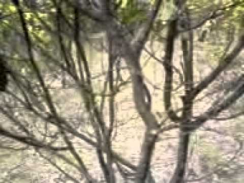 ACRES of MASSIVE bush food stash