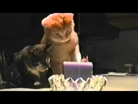キャンドルの火を瞬殺猫パンチで消火!