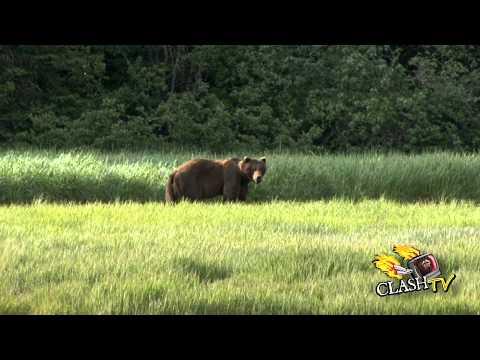 Lov medvěda grizzly I.