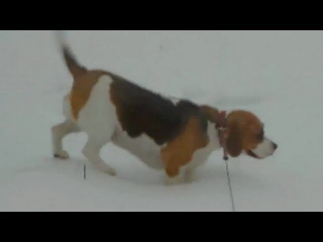 Tough winter day for the dog - Funny dog video