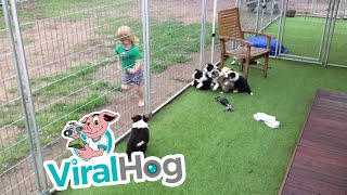 Toddler Exercise Program || ViralHog