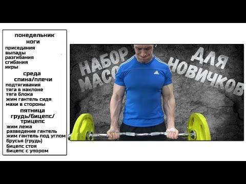 Программа тренировок на мышечную массу