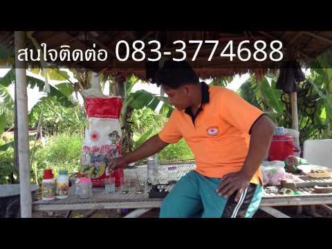 วิธีการปลูกมะนาวในวงบ่อ : วิธีการการดูแลรักษา
