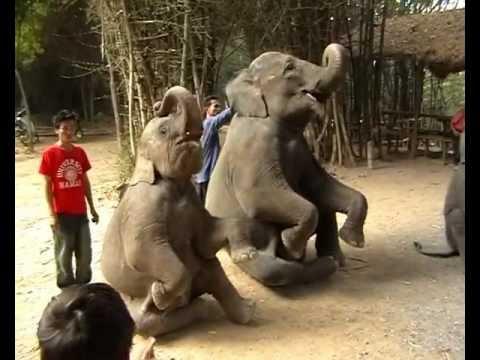 Таиланд - выступление слонов.