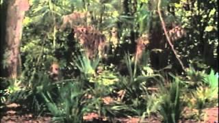 Walking Dead Trailer 1994