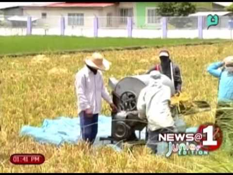 Mindanao organic farmers calls for help against genetically grown golden rice [04|27|14]