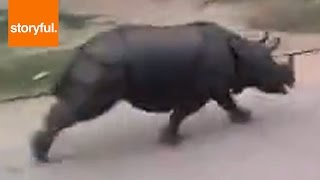 Huge rhino chases motorcycle