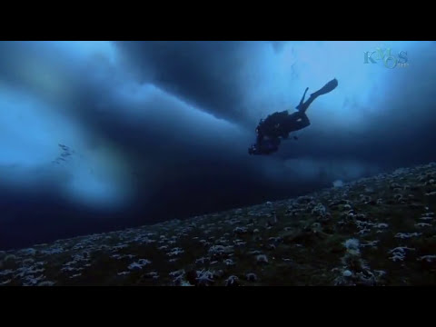 Animals in the Antarctic Ice