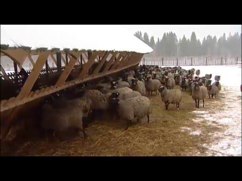 В Пермском крае активно развиваются семейные фермы