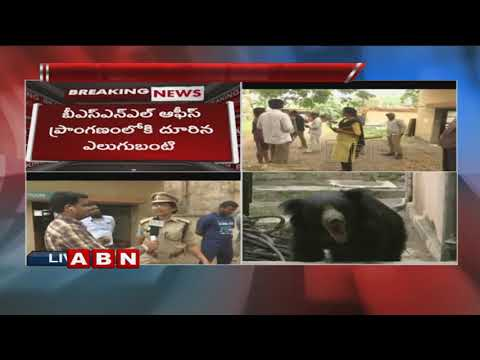 Exclusive Visuals | Bear Hulchul at Karimnagar BSNL Office | Forest Officers Tries To Capture Bear
