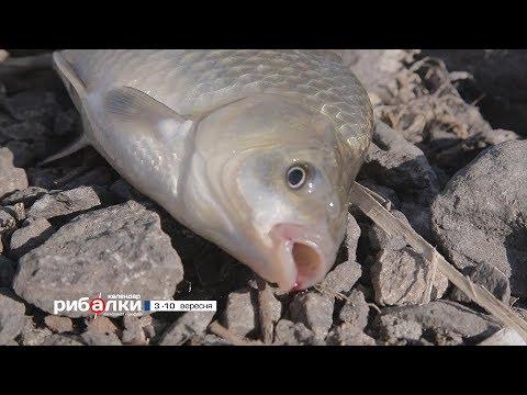 Календар рибалки з 3 по 10 вересня  2018 року від телеканалу Трофей