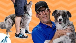 How To Teach Your Dog To Walk On Your Feet - Dog Trick Tutorial