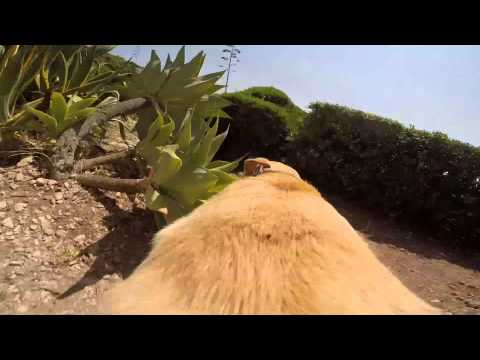 Walter es un Labrador que realmente ama el agua