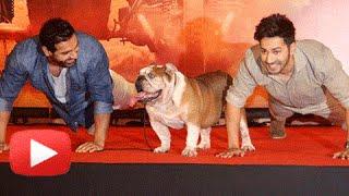 Dishoom Success Party Full Movie Highlights   Varun Dhawan, John Abraham Celebrate