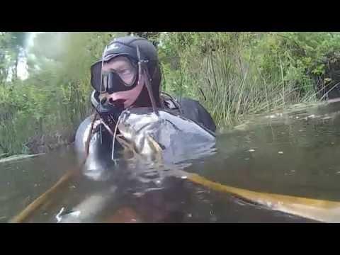 Подводная охота на сома  2016