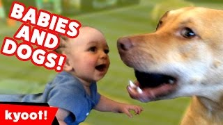 Dogs Playing with Babies Compilation October 2016 | Kyoot Animals