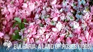 A Travel Guide to Bulgaria in the '60s: A Land of Roses (1965) | British Pathé