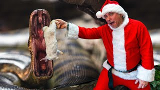 FEEDING MY GIANT SNAKES AND ALL MY REPTILE DRESSED AS SANTA!! MERRY CHRISTMAS! | BRIAN BARCZYK