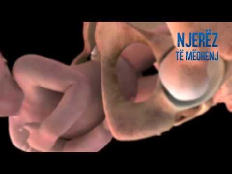 Zhvillimi i njeriut në barkun e nënës, nga ngjizja deri në Lindje (Pamje spaktakulare)