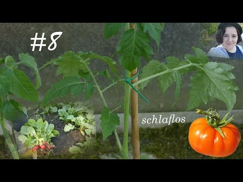 Schlaflos im Garten | Tomaten pflanzen & Radieschenernte | Vlog #8