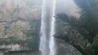SELVAS  AMAZONICAS