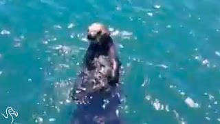 Baby Sea Otter Reunites With Her Worried Mom | The Dodo