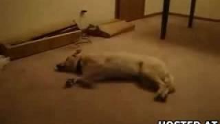 Álmában szaladó kutya