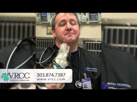 VRCC Veterinary Specialty amp Emergency Hospital - About Us